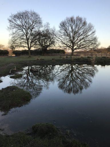 Symmetry - Reflection