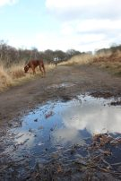 Shooting from low down to make puddle seem much larger