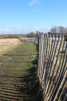 Landscape - perspective slightly skewed on fence