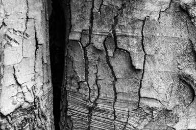 I was drawn to the detailed texture of the bark. The shadows beyond draw the eye on.