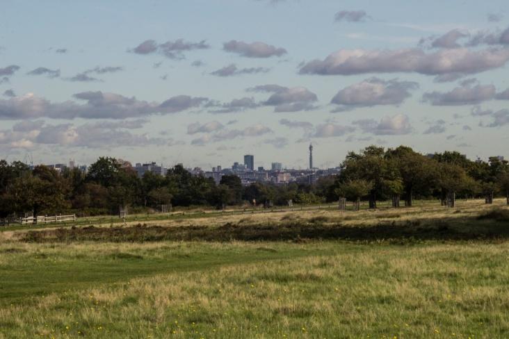City skyline from Sawyer's Hill