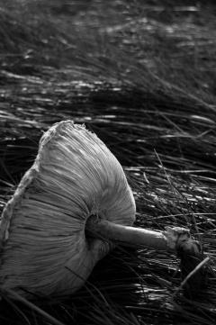 Felled fungi in Richmond Park