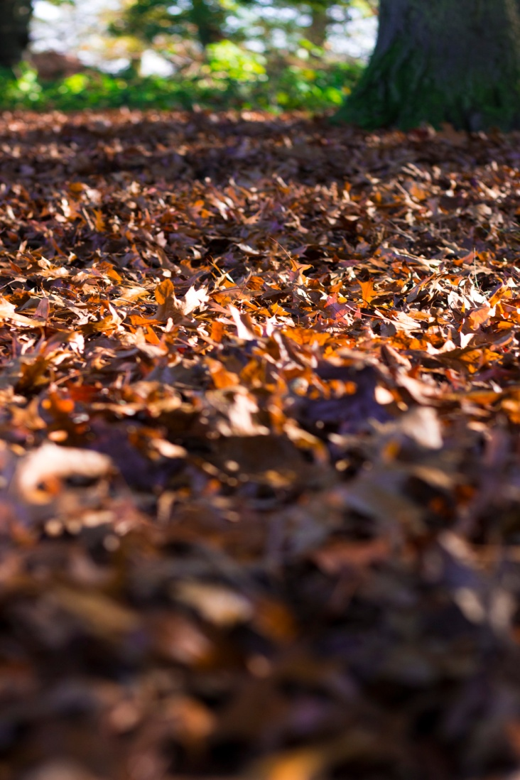 AUTUMN LEAVES IMG_6673