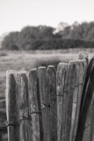 Fence detail, Richmond Park