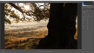 ORIGINAL IMAGE - BRIGHT SUNLIGHT MEANT TREE WAS TOTALLY UNDEREXPOSED