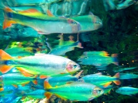 colour photograph of fish underwater, images slightly distorted, by Michael O'Neill
