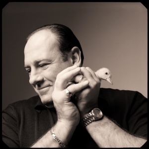 Black and white photograph of James Gandolfini holding a duckling by Michael O'Neill