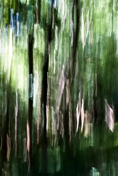 WOODLAND ICM FOR WEB_MG_9404