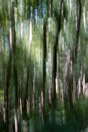 WOODLAND ICM FOR WEB_MG_9408